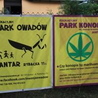 Park owadów i konopii indyjskich w Jantarze